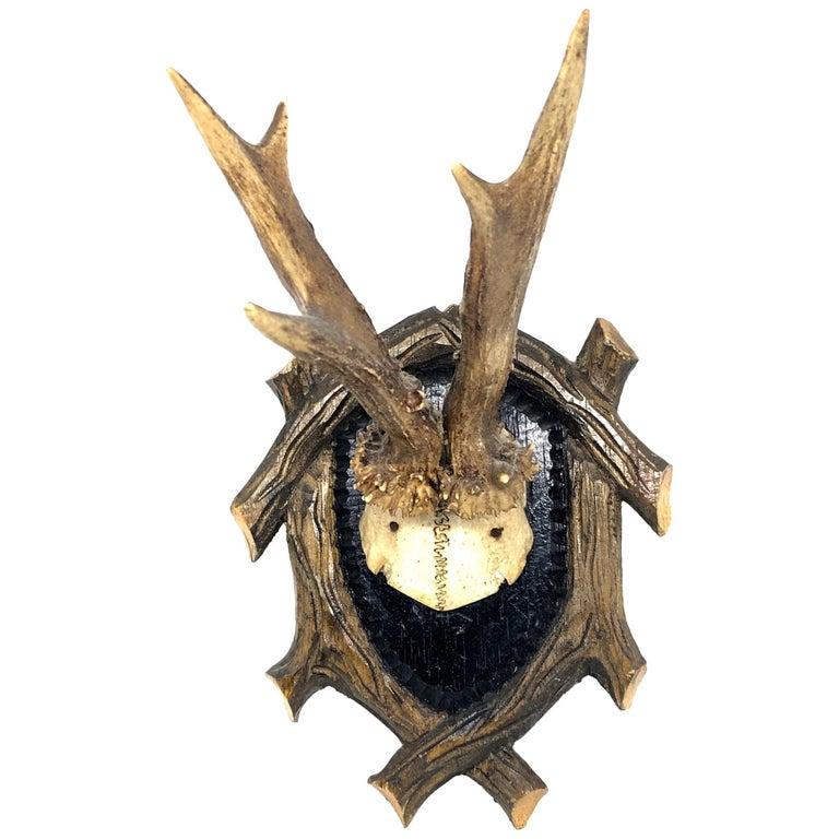 Vintage Black Forest Deer Antler Trophy on Wood Carved Plaque, German, 1950s For Sale