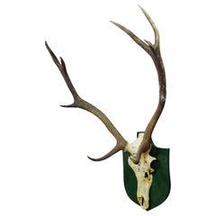 Vintage Black Forest Deer Trophy from Salem, Germany, Altenau, 1956
