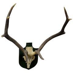 Vintage Black Forest Deer Trophy from Salem, Germany, Baerenkopf, 1956