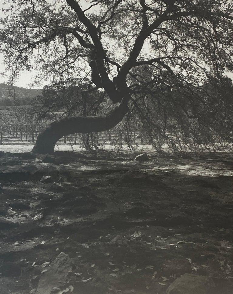 20th Century Vintage Black & White Photograph