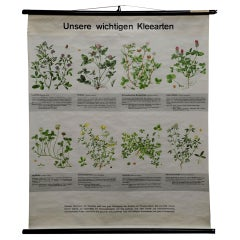 Vintage Botanical Pull Down Wall Chart about Clovers