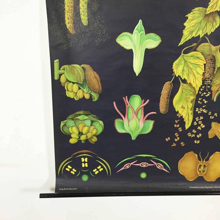 Vintage Botanical West German Biology Print by Hagemann, Germany, 1964 In Good Condition For Sale In Kirchlengern, DE
