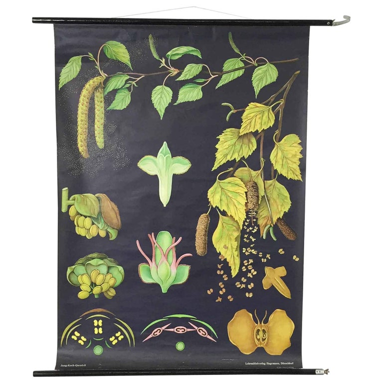 Vintage pull down chart  Original vintage school chart, by Jung-Koch Quentell  Paperprint on Linen. The canvas is fixed between two wooden dowels. There is a ribbon for hanging it up the wall. Can be rolled up for transportation and