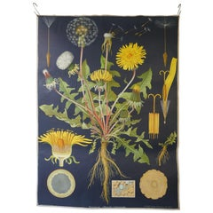 Vintage Botanical West German Biology Print Chart by Hagemann, Germany, 1960s