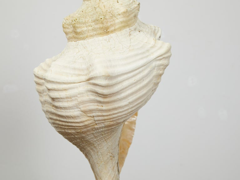 Vintage Conch Shell Table Lamp from the Midcentury Mounted on Round Lucite Base For Sale 2
