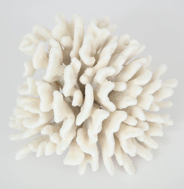 A very large vintage coral, circa 1970. Beautiful sculpture.