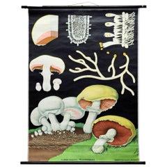 Vintage Cottagecore Jung Koch Quentell Wallchart Mushroom Rollable Poster Print