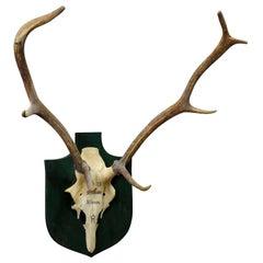 Vintage Deer Trophy Spain El Cerron with Eight Ends