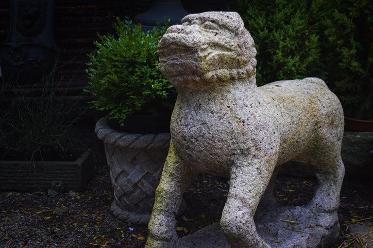 Known in English as lion dogs or foo dog, these guardian statues originate from Chinese Buddhism. These stone lions known as shishi are a highly stylized creature meant to protect the building from harmful spirits. This vintage garden lion is a rare