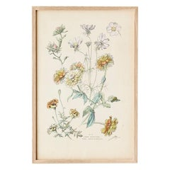 Vintage Hand Colored Botanical Print, Italy, 19th Century
