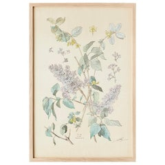Vintage Hand-Colored Botanical Print, Italy, '19th Century'