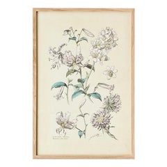 Vintage Hand-Colored Botanical Print, Italy, 19th Century