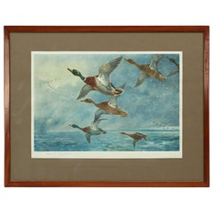 Vintage Hunting Print, Mallards Flying, Driven by The Storm, Archibald Thorburn