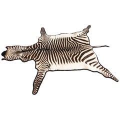 Vintage Large Taxidermy Zebra Skin Rug with Felt Backing, 20th Century