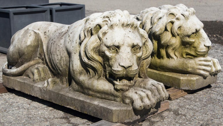 Majestic pair of vintage marble reclining lions. Beautiful patina on each one. A left and right facing design. They originally adorned an entranceway in Westchester, NY. Truly a magnificent example of garden elements that welcome company to a