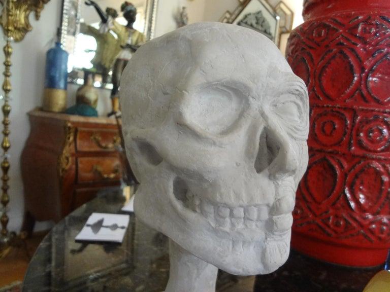 Vintage Plaster Anatomical Skull Models For Sale 6