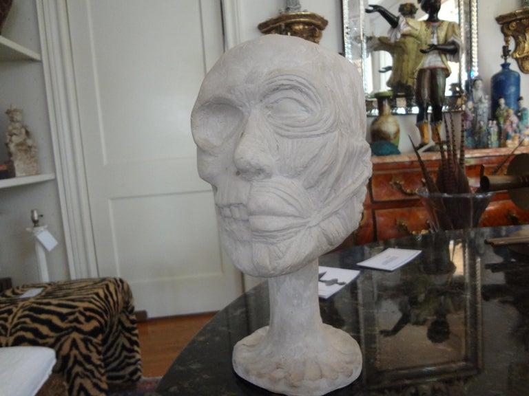 Other Vintage Plaster Anatomical Skull Models For Sale