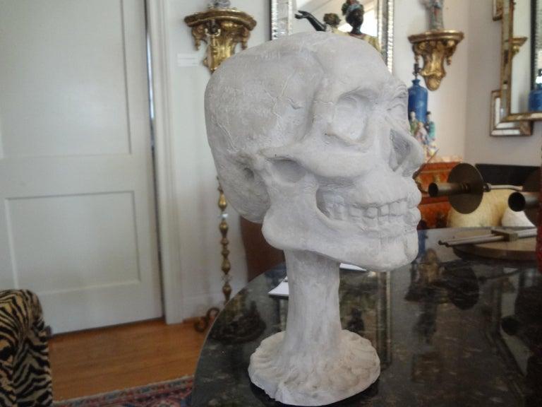 Mid-20th Century Vintage Plaster Anatomical Skull Models For Sale