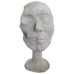 Vintage Plaster Anatomical Skull Model