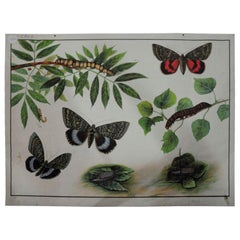 Vintage Poster Chart Caterpillars Butterflies Insects Country Style Decoration