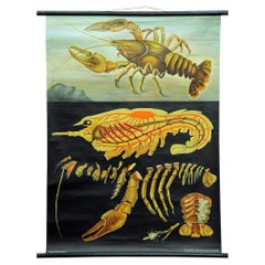 Vintage Poster Pull-Down Wall Chart Jung Koch Quentell Crayfish Maritime Deco
