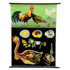 Vintage Pull-Down Wall Chart Jung Koch Quentell Chicken Hen Country Style