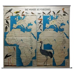 Vintage Rollable Wall Chart Miracle of Bird Migration Poster Europe Africa