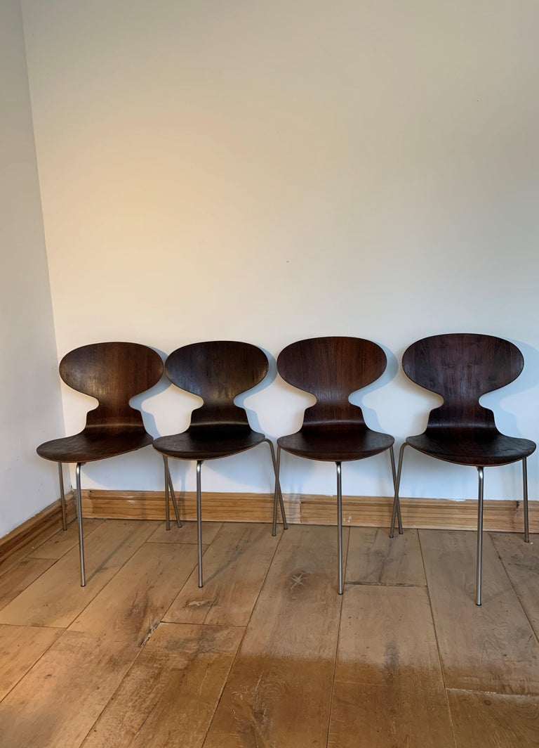 This set of 4 early version model 3100 ant chairs was designed by Arne Jacobsen. Fritz Hansen confirmed that this set was produced in January 1967. The pieces are made of rio rosewood veneer on a tubular steel frame with three legs, and retain the