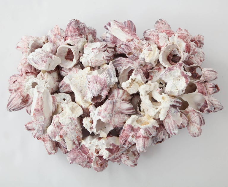 Vintage Sea Shell, Pink, Large In Excellent Condition For Sale In New York, NY