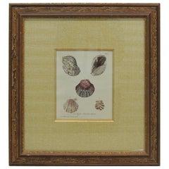 Vintage Seashells Specimen Framed Print