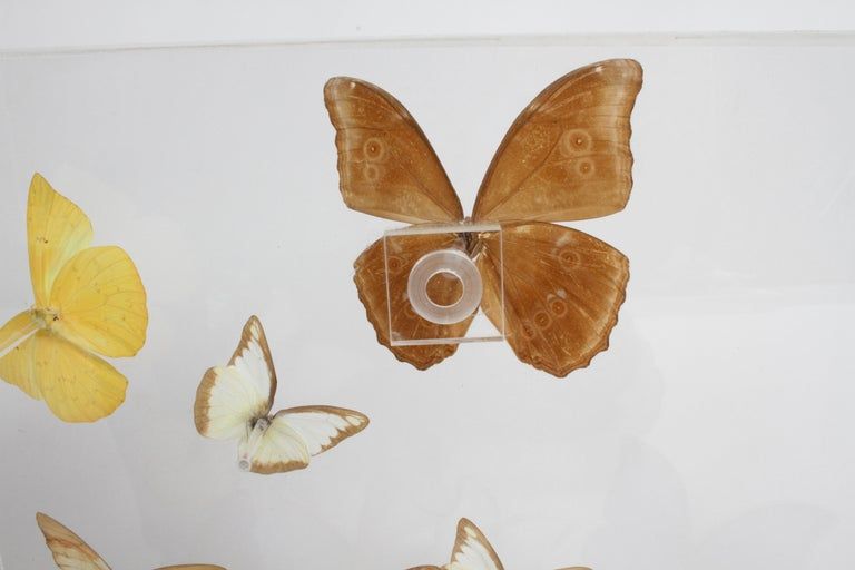 Vintage Taxidermy Butterfly Collection in Lucite Display Signed by Linda Bosse For Sale 5