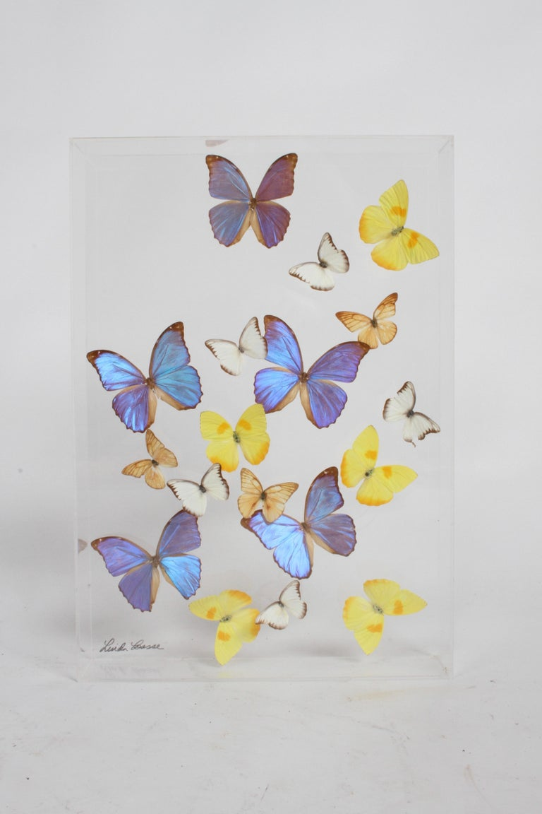 Vintage Taxidermy Butterfly Collection in Lucite Display Signed by Linda Bosse For Sale 6