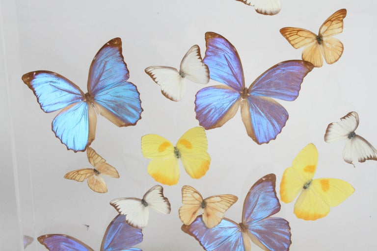 Vintage Taxidermy Butterfly Collection in Lucite Display Signed by Linda Bosse For Sale 7