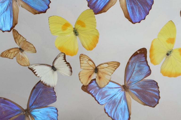 Vintage Taxidermy Butterfly Collection in Lucite Display Signed by Linda Bosse For Sale 8