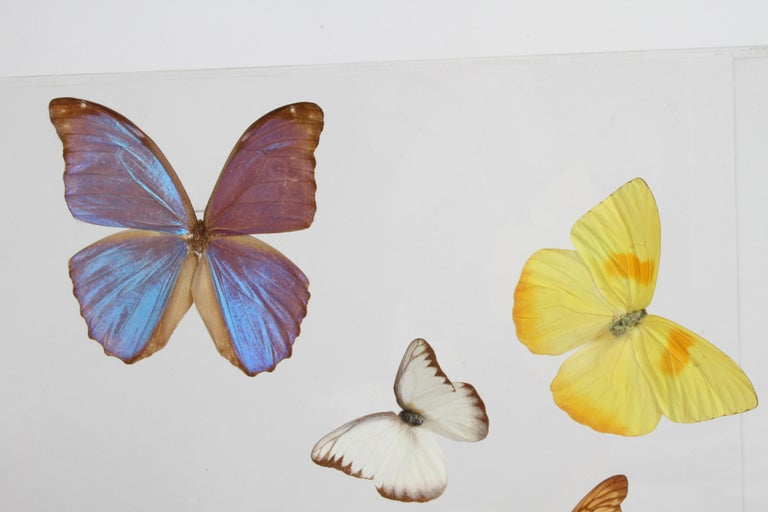 Vintage Taxidermy Butterfly Collection in Lucite Display Signed by Linda Bosse For Sale 9