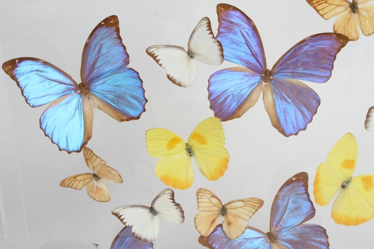 Mid-Century Modern Vintage Taxidermy Butterfly Collection in Lucite Display Signed by Linda Bosse For Sale