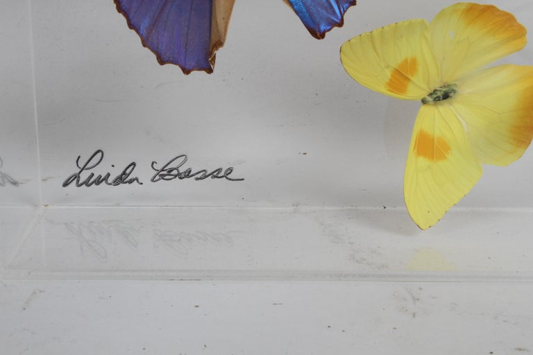 American Vintage Taxidermy Butterfly Collection in Lucite Display Signed by Linda Bosse For Sale