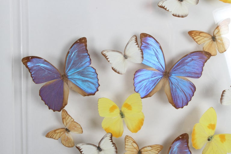 Vintage Taxidermy Butterfly Collection in Lucite Display Signed by Linda Bosse In Good Condition For Sale In St. Louis, MO
