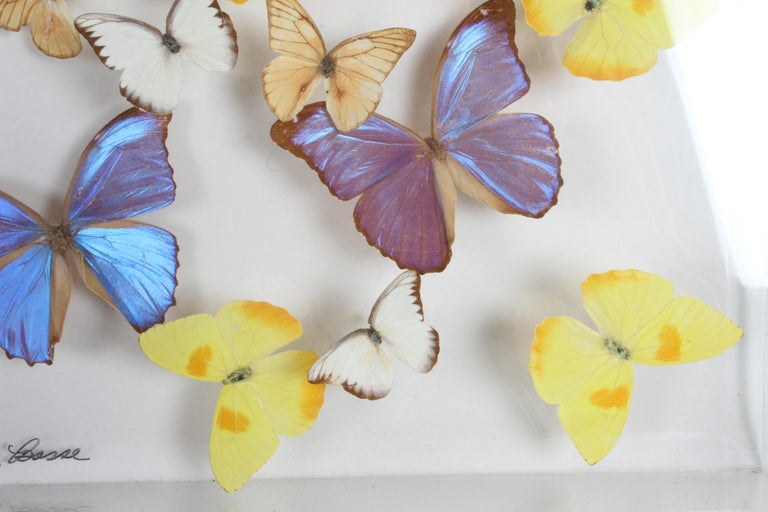 Late 20th Century Vintage Taxidermy Butterfly Collection in Lucite Display Signed by Linda Bosse For Sale