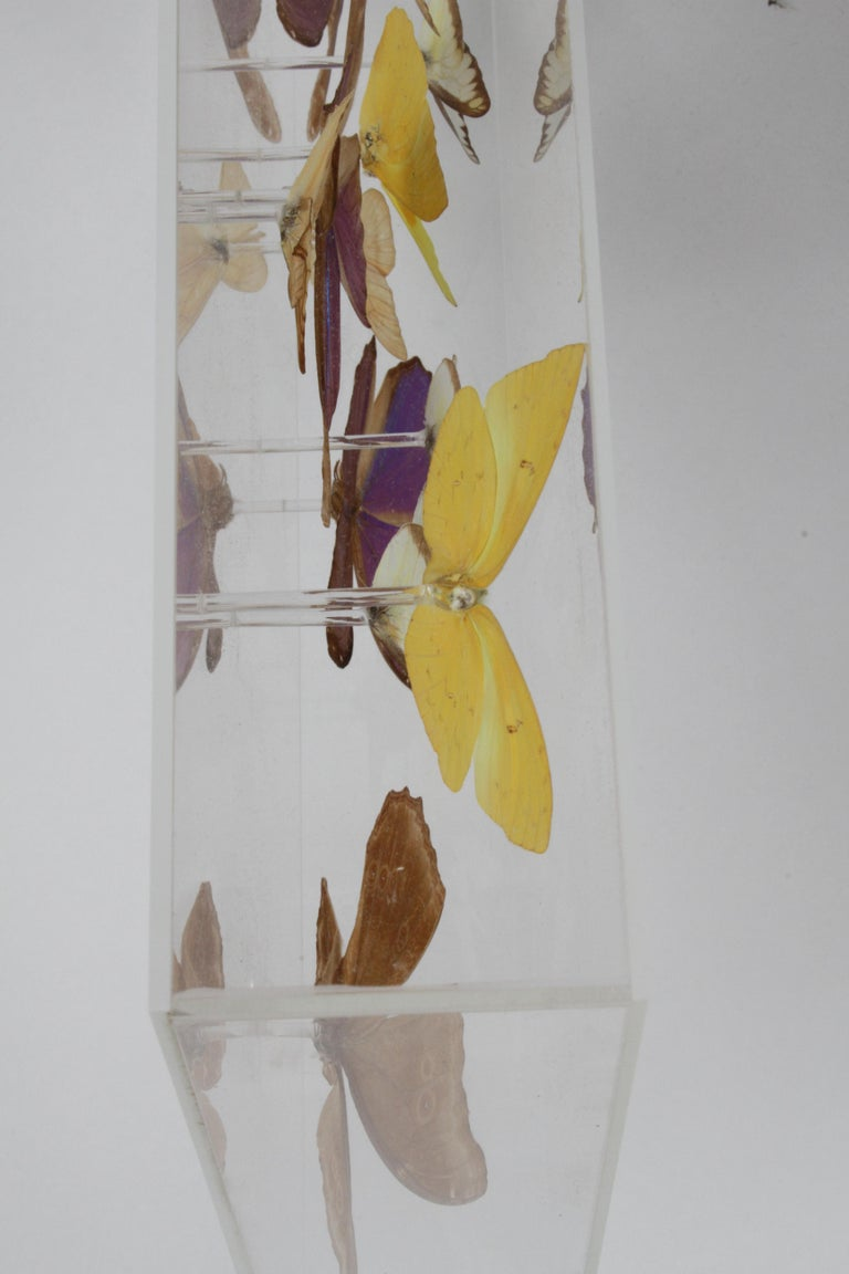 Vintage Taxidermy Butterfly Collection in Lucite Display Signed by Linda Bosse For Sale 1