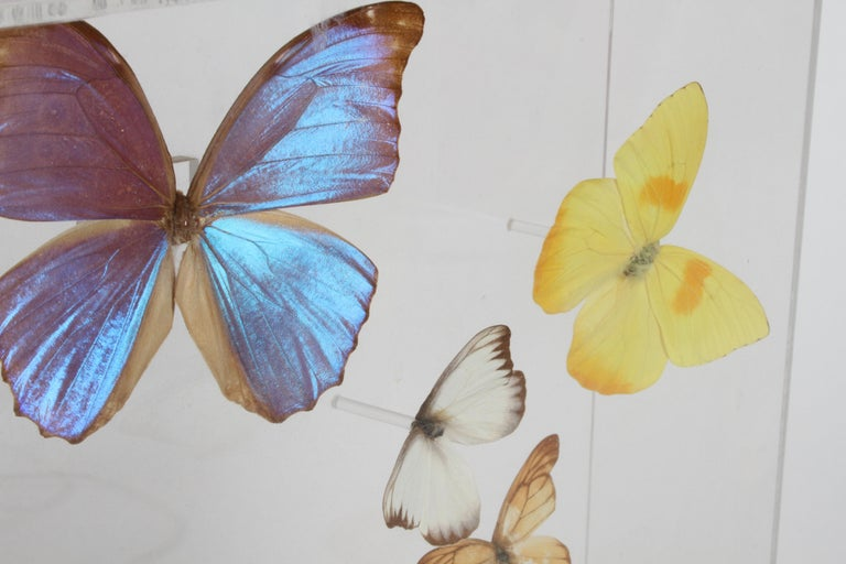 Vintage Taxidermy Butterfly Collection in Lucite Display Signed by Linda Bosse For Sale 2