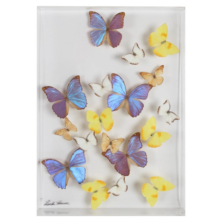 Vintage Taxidermy Butterfly Collection in Lucite Display Signed by Linda Bosse For Sale
