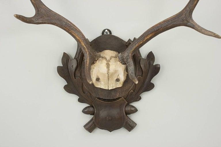 Vintage Taxidermy, Antlers on Shield