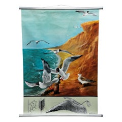 Vintage Wall Chart Picture Poster Birds Black-Headed Gull Jung Koch Quentell