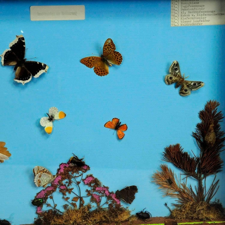 Mid-Century Modern Vintage Wall Decoration Glass Display of the Insects of the Forest Edge For Sale