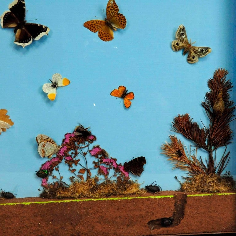German Vintage Wall Decoration Glass Display of the Insects of the Forest Edge For Sale