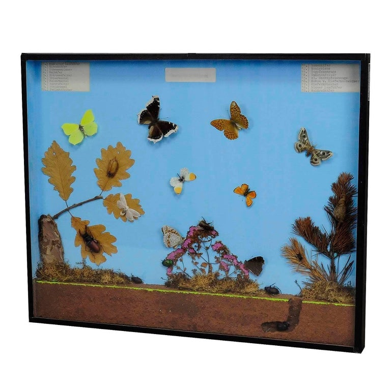 Vintage Wall Decoration Glass Display of the Insects of the Forest Edge For Sale