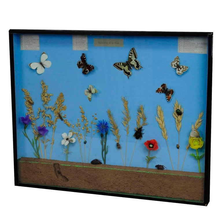 Vintage Wall Decoration School Teaching Display of the Insects of the Grassland