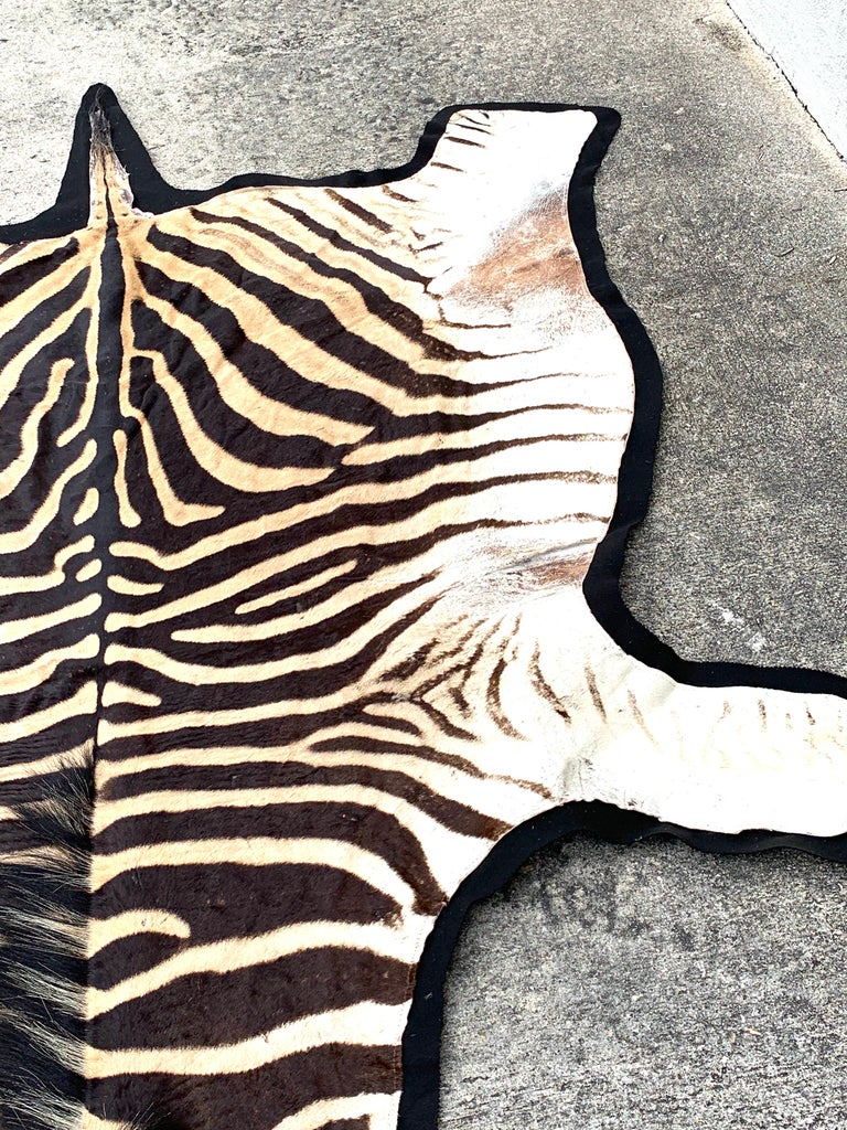 Vintage Zebra Hide Rug Newly Backed For Sale At 1stdibs