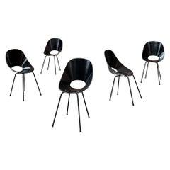 "Vittorio Nobili ""Medea"" Dining Chairs for Fratelli Tagliabue, 1955, Set of 5"